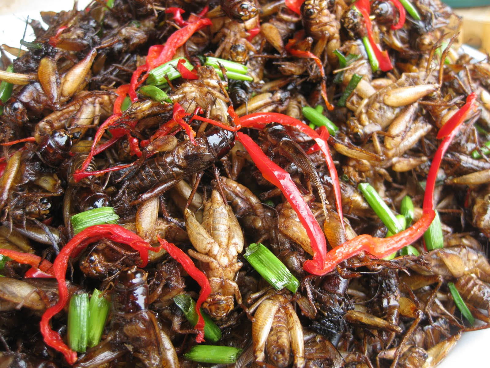 a pile of crickets
